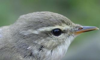 Bird_Species-19-mryhvw