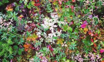 Dude-Mountain-Trail-dude-mountain-foliage-jessica-hardy-owuglw