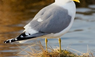 Bird_Species-02-mxq7k4