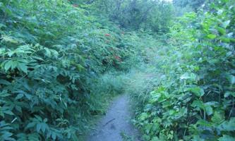Bodenburg-Butte-Trail-02-mxq4fx