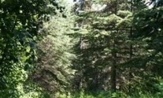 Keen-Eye-Nature-Trail-02-mxq6f8