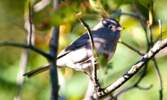 Bird_Species-11-mxq6ht