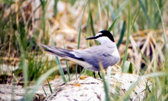 Bird_Species-13-mxq6i5