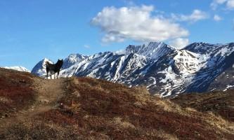 Twin-peaks-trail-twin-peaks-trail-stacy-pritts-p4inc8