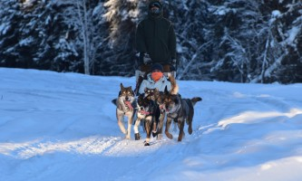 2019 sled dog rides pmkpy2