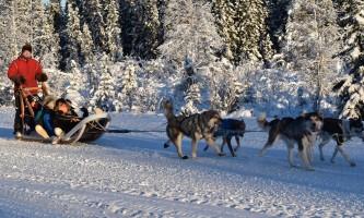 2019 alaska dog mushing 28129 pmkpy5