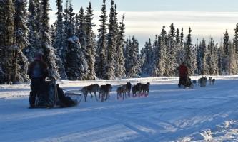 2019 alaska dog sled rides pmkpy8