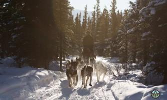 Traverse alaska winter activities mf201703010004 pjyet4