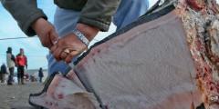 Barrow Whaling Festival