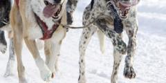 Iditarod Sled Dog Race (Ceremonial Start)