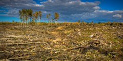 Clearcutting for Wildlife
