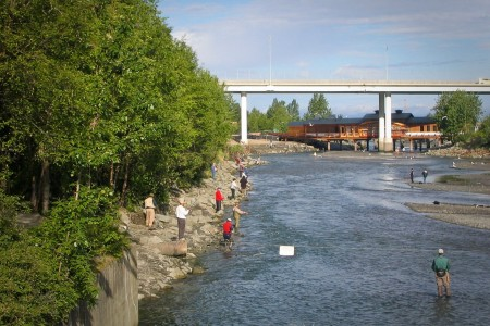 Salmon Viewing at Ship Creek