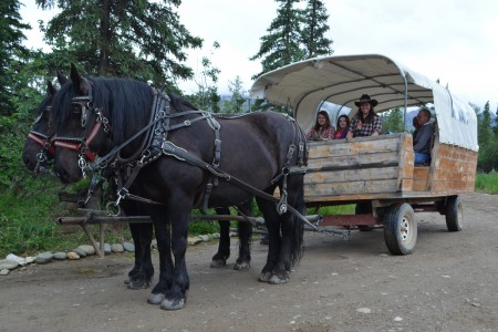 Denali Black Diamond Covered Wagon