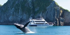 Major Marine Kenai Fjords Cruise