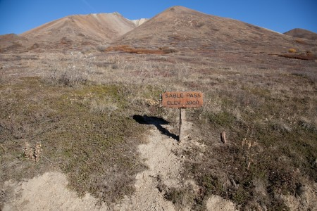 Sable Pass - Look For Bears, Wolves & Caribou: Mile 39.05 Denali Park Rd