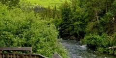 Salmon Viewing at Ptarmigan Creek