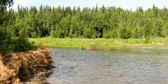 Slikok Creek Salmon Viewing