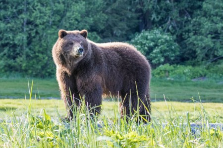 Pack Creek Bear Tours