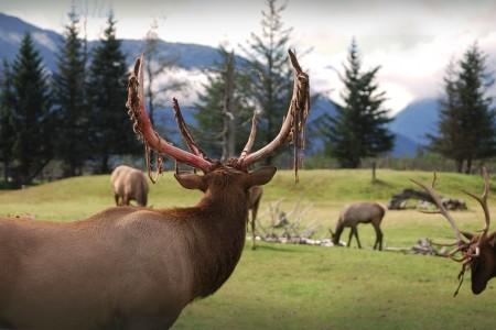 PicTours Alaska