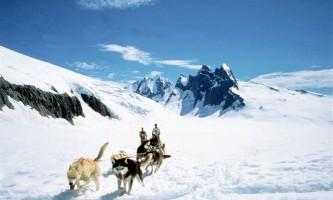 Temsco skagway dog sledding and glacier flightseeing by helicopter dog sled coming toward you rsz p236xa
