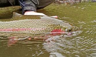 Alaskas-Wilderness-Place-Lodge-P7300277_copy-o0jxvd