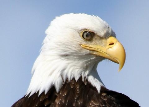 A Bald Eagle enjoying Glacier Bay National Park