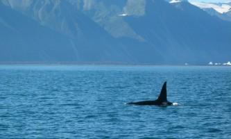 Soldotna-bnb-alaska-fishing-charters-whale-ohfh1e