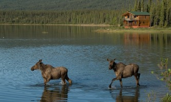 Iniakuk_Lake_Wilderness_Lodge-12-nxxi7e
