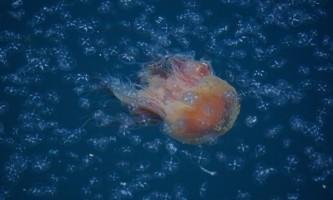 Geographic-marine-expeditions-DSC01144-p4mkju