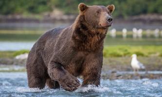 2018-Jess_Chris_photos_for_Island_Bears-2-p54hig
