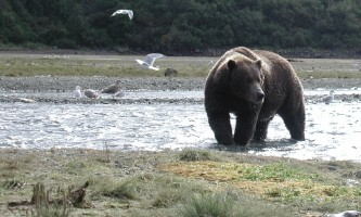 Alaska-Ultimate-Safaris-P9060005-p5lkn5