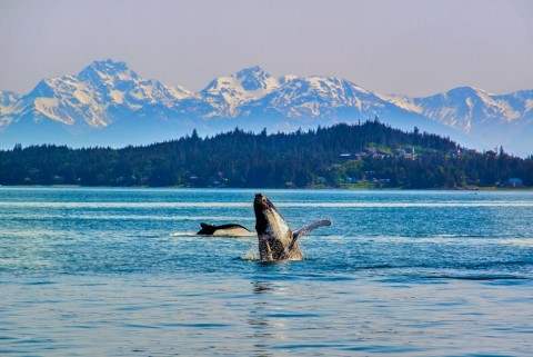 Interested in wildlife? Captain Hoock will bring your group to the best viewing spots