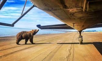 Alaska Air Service Bears Lake Clark IMG 9901