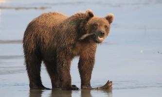 Alaska bear adventures IMG 1362