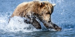Alaska Bear Adventures Boat-Based Bear Viewing Tours