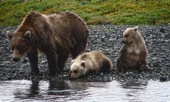 Alaska Bear Adventures with K Bay am jjf 041 mod2019