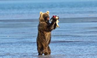 Alaska Bear Adventures with K Bay pm 214mod2019