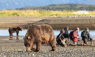 Alaska Bear Adventures with K Bay IMG 5301 22019