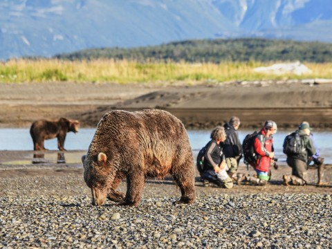 Safely view and photograph bears in their natural habitat