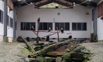 Alaska raptor center Flight Training Center 2017