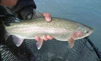 Alaska River Adventures Fishing P10206152019