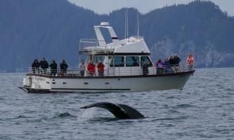 Alaska saltwater lodging Steller Explorer with humpback alaska saltwater lodging