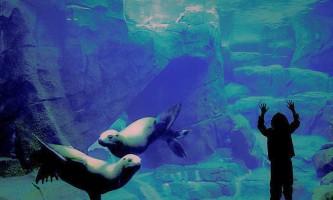 Alaska Sealife Center cc Sea Life Center12019