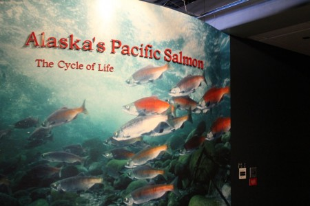 Lives of Pacific Salmon