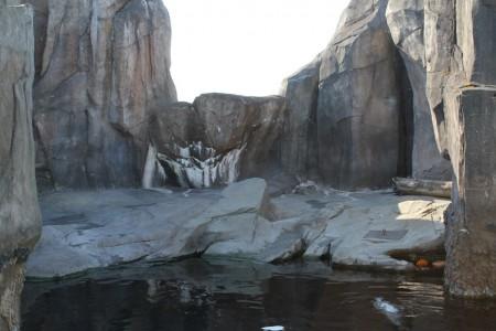 Harbor Seal Habitat