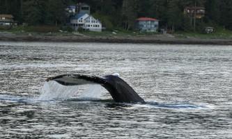 Alaska Tales Whale Watching Brian 1 E4 A9480