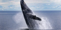 Alaska Tales Whale Watching Juneau