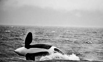 Whale watching adventure whale5 Alaska Travel Adventures