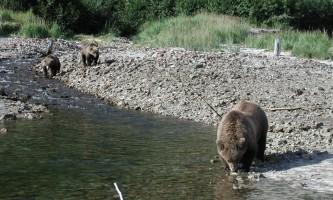 Alaska Ultimate Safaris P90300492019