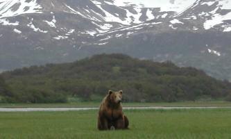 Alaska Ultimate Safaris P10100342019